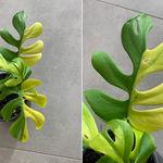 4.600€ por una planta: la fiebre por el interiorismo botánico está alcanzando cotas inéditas