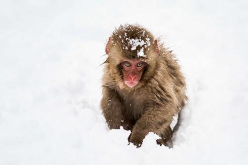 Chaos Engineering: ¿resistirían tus servidores en la nube el ataque de un ejército de monos locos?