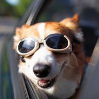 """Tesla podría agregar un """"Modo Vigilante"""" y un """"Modo Perro"""" en sus autos muy pronto"""