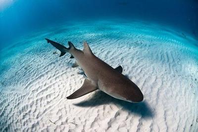 """Maldivas declara todas sus aguas marítimas como """"reserva de tiburones"""""""