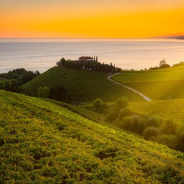 Descubriendo el txakoli, el rey blanco del vino vasco: sus denominaciones de origen, cómo identificarlo y ocho recetas para maridarlo