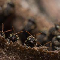 El verano de los mosquitos: lluvias, confinamiento y calor han creado el clima perfecto para el boom de las plagas veraniegas