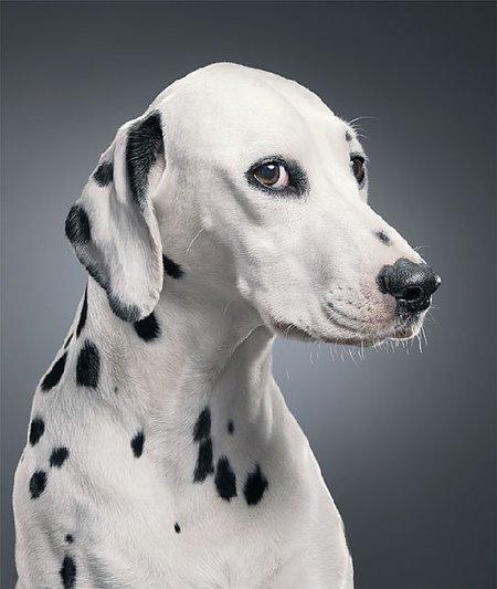 Dogs, por Tim Flach
