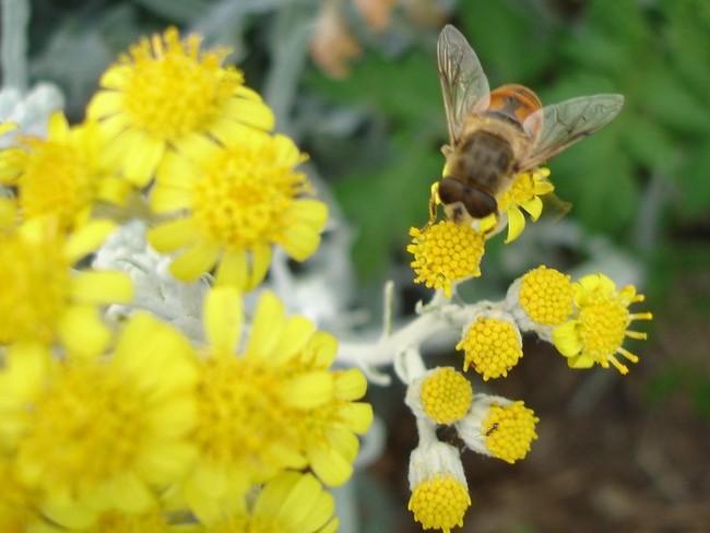 La sabiduría matemática de los insectos