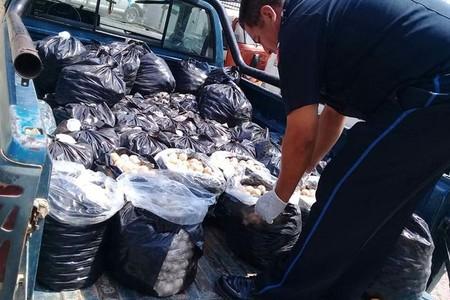 El tráfico de especies sigue en México: se recuperaron 22 mil huevos de tortuga marina, el aseguramiento más gran del país