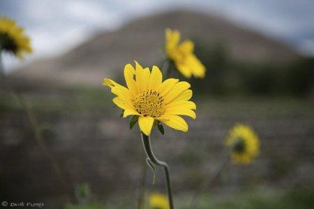 """""""Traed flores amarillas"""""""