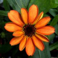 Esta es la primera flor que ha nacido en el espacio