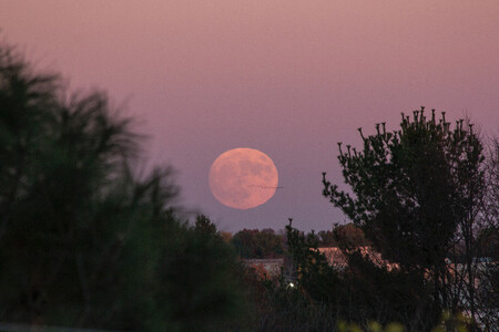 Luna De Fresa Como Fotografiarla 02