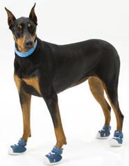 Zapatillas para las mascotas