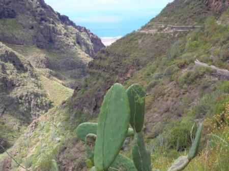 Barranco Del Infierno En Adeje