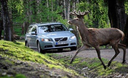 Volvo intenta evitar el atropello de animales con un nuevo sistema de seguridad
