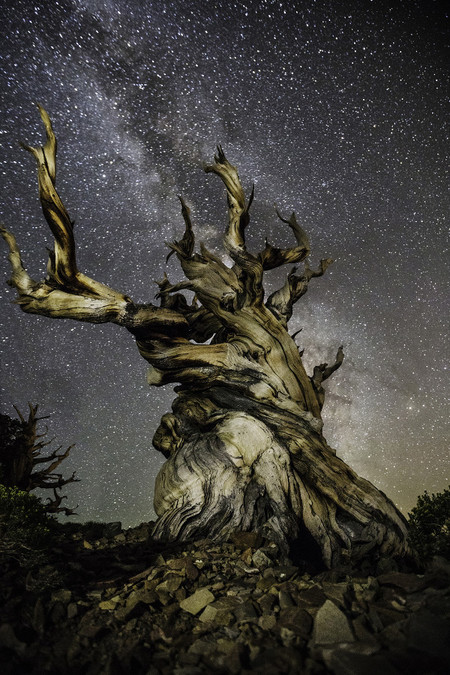 Diamond Nights Beth Moon 2