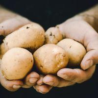 La patata constituye otra opción de origen vegetal para obtener buenas proteínas si buscas ganar músculo, según un estudio