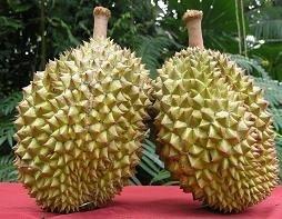 Durian, una fruto diferente