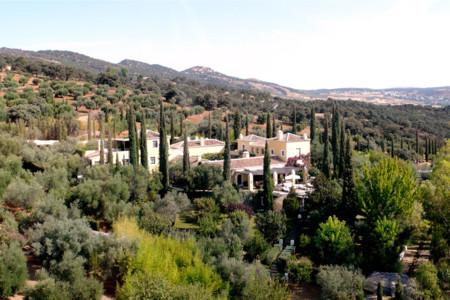 Un aceite de oliva ecológico español es elegido el mejor aceite ecológico del mundo