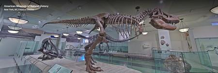 Museos Virtuales Americano Historia Natural