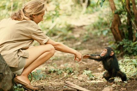 Jane Goodall Hugo Van Lawick National Geographic Creative