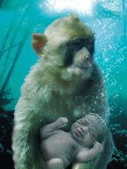 Introducción a la Teoría del Mono Acuático