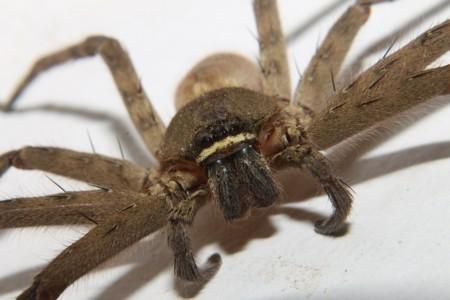 Spider 191362 1280