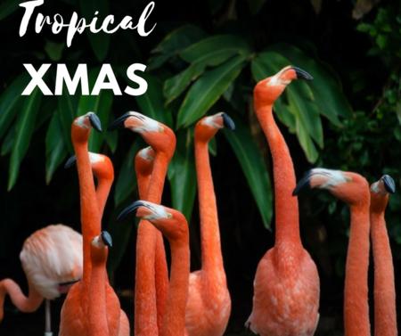 7 musts decorativos para darle un toque tropical a tu Navidad