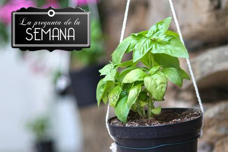 ¿Cultiváis hierbas aromáticas en casa? La pregunta de la semana