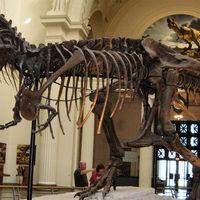 Charlie, el niño de 10 años con Asperger capaz de corregir al Museo de Historia Natural de Londres