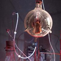 La cahqueta de 'cuero de ratón' que se expuso en un museo de arte moderno