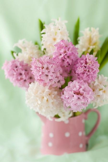f2fd1a9ec4cf6 Cinco flores para decorar tu casa en primavera