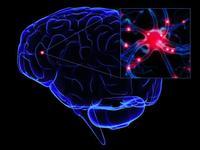 El Cerebro, evolución y funcionamiento (y III)