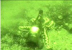 Cavas submarinas en Chile