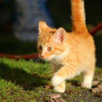 Disfruta del deporte con tu mascota: ¡apúntate al gaticross!