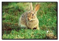 Virtudes nutricionales de la carne de conejo