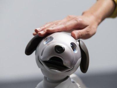 Mi hijo de 5 años se ha encariñado con un robot en vez de con un perro, ¿y ahora qué?