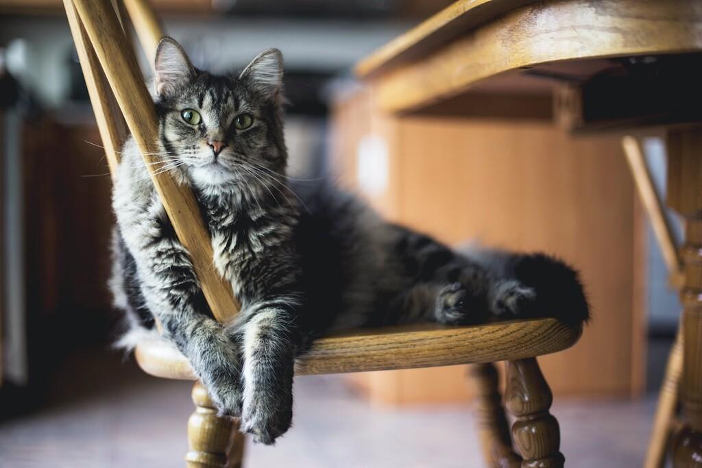 La arena para gatos que arrasa en Amazon cuesta menos de 7 euros, tiene más de 4.000 valoraciones y te la envían gratis con Prime
