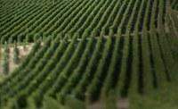 Krug Clos du Mesnil, el champagne que Dios ofrece a los ángeles