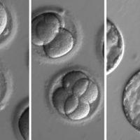 Ya tenemos el estudio científico del año: investigadores de EEUU corrigen defectos genéticos en embriones humanos