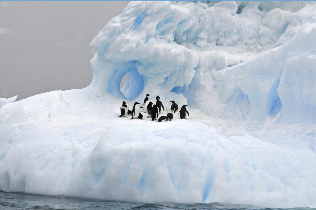 Iceberg 02