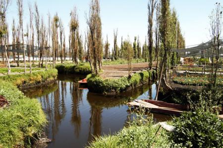 Desechos orgánicos podrían ser la clave para rehabilitar chinampas de Xochimilco