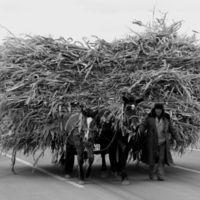 Bellas imágenes de los últimos resquicios tradicionales de China a través de la cámara de Javier Telletxea