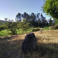 Foto 5 de 18 de la galería oppo-f1-camara en Xataka Android