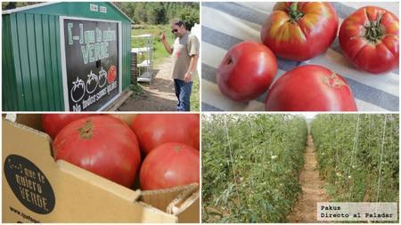 tomates_piel_de_doncella.jpg