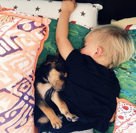 cachorro-bebe