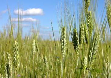 Alimentos capaces de soportar el cámbio climático