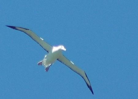 Éstas son los primeros pájaros que han sido censados desde el espacio