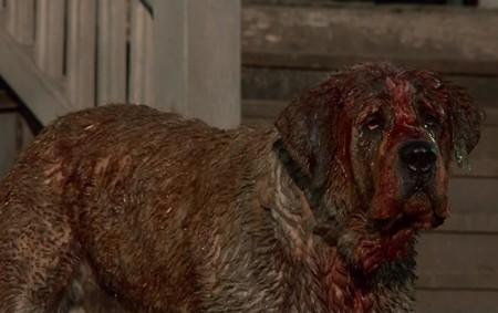 'Cujo', en marcha una nueva adaptación de la novela de Stephen King