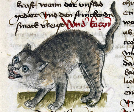 Ugly Medieval Cats Art 112 5aafb7efce958 700