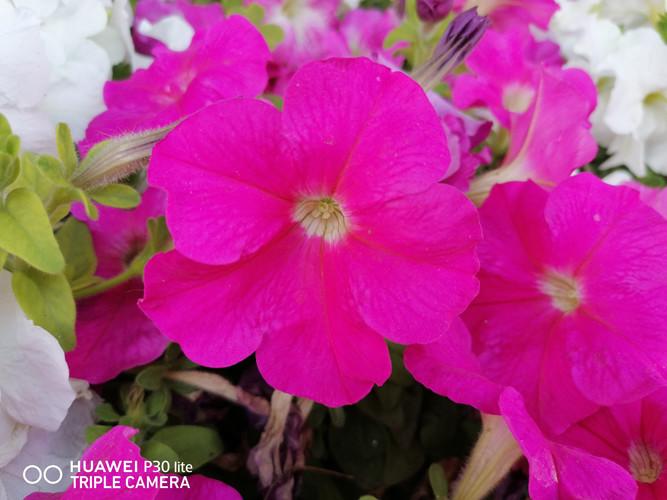 Foto de Fotos tomadas con el Huawei P30 Lite (55/153)