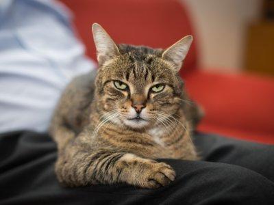 Quizá sea hora de que dejes de hacer vídeos graciosos a tu gato. Es por su bien