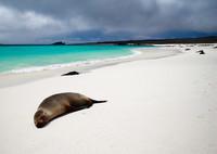 El mejor momento del año para viajar a las Islas Galápagos: El clima