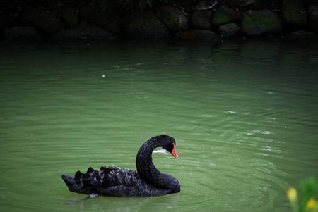 Cisne Negro de Nassim Nicholas Taleb